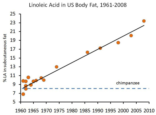 linoleic-acid-in-body-fat
