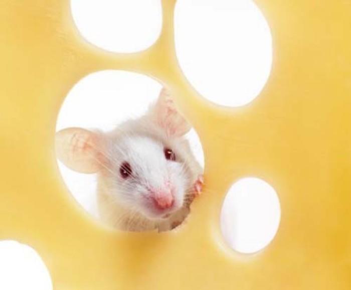 мышь 1
