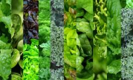 Mixed-Greens-2-1080x675