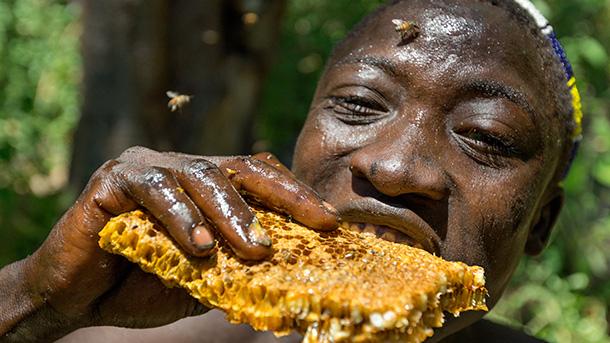 Почему нас тянет на сладкое, или сколько меда ели наши предки?